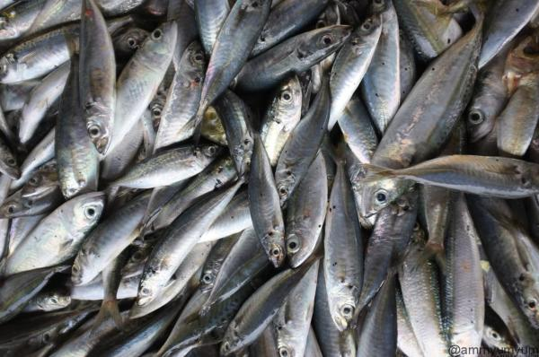 Fish-market-Borneo-18